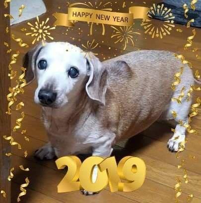 2019新年明けましておめでとうございます!